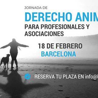 Derecho Animal para profesionales y asociaciones