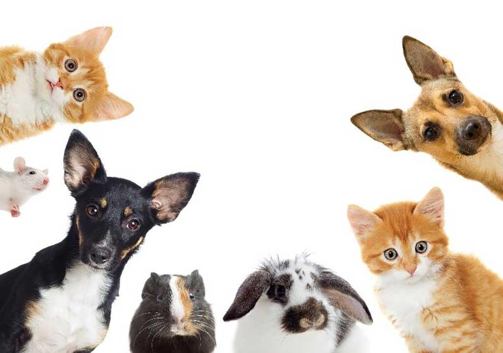 Nombre para perros y gatos, conejos, tortugas... :)