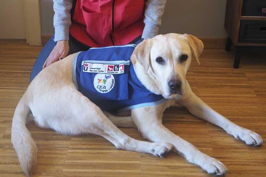 Experto en Intervenciones Asistidas con Animales de la URJC.