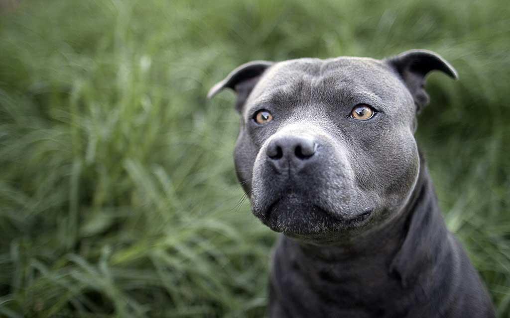 Ley de Perros Potencialmente Peligrosos, lo que dice la Ley (pero no se sabe).