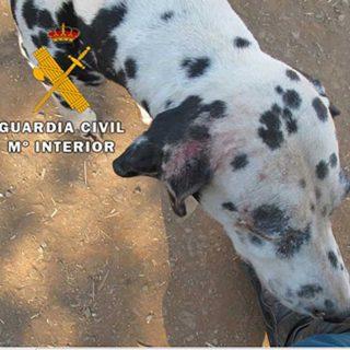 Han sido investigadas tres personas por delitos de abandono de animales, siendo rescatados un total de 38 perros. Uno de los canes tuvo que ser sacrificado por la grave situación en la que se encontraba.