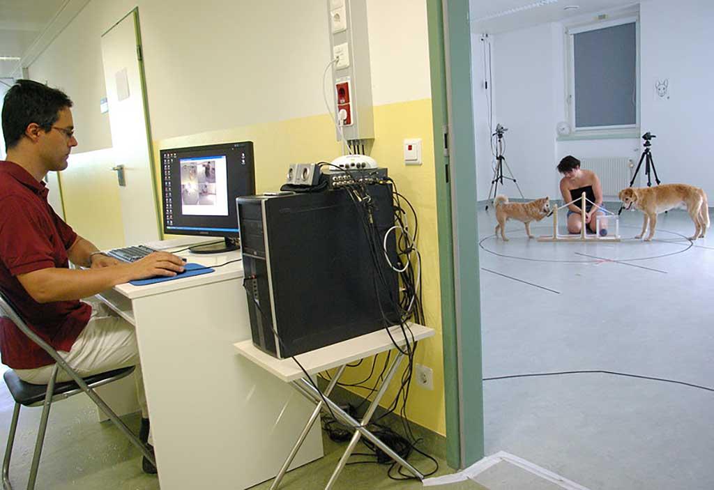 En un estudio de Clever Dog Lab, nos demuestran que los perros, como las personas, emvejecen mejor si mantenemos su actividad física y mental.