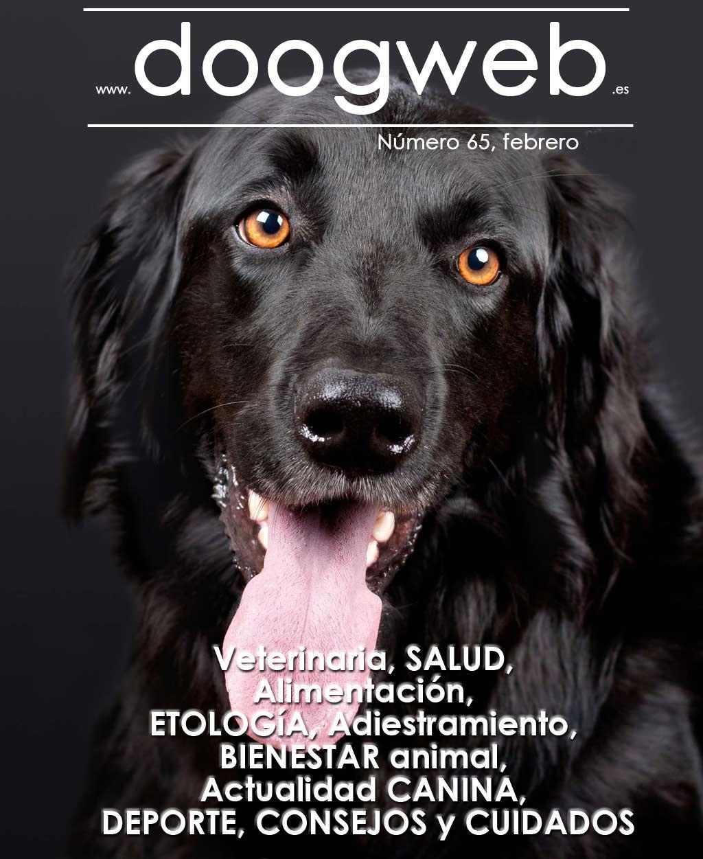 Revista gratis de Doogweb