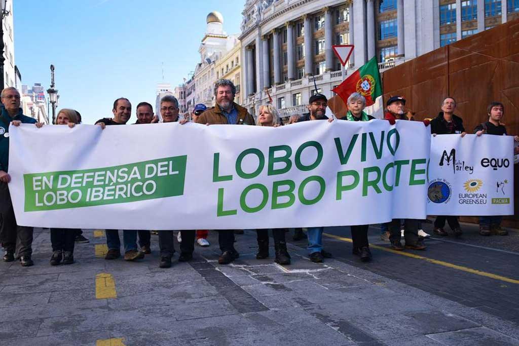 Manifestación en defensa del lobo ibérico en Madrid.