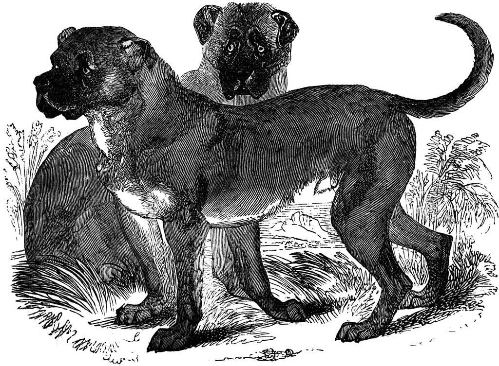 Queremos a los perros... ¡Desde el Paleolítico!