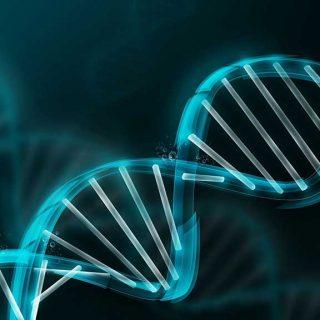 El Ayuntamiento de Madrid quiere obligar a identificar por ADN a tu perro (para multarte)