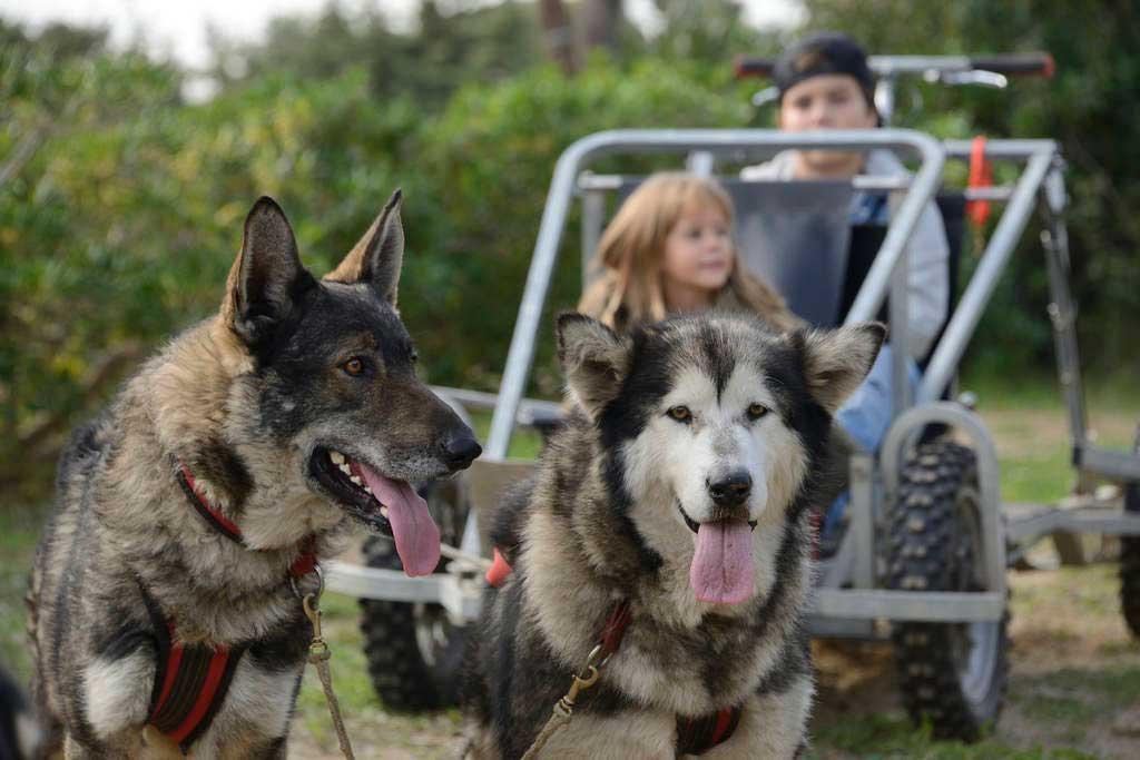 Segunda edición del Dog Day by Gos Àrtic, la gran fiesta del deporte con perros.