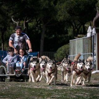 Éxito de participación en la segunda edición del Dog Day