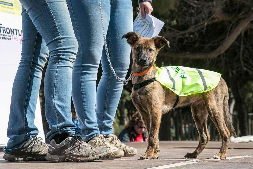 Éxito de participación en la segunda edición del Dog Day.