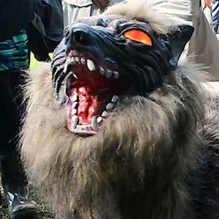 Glowering wolf.