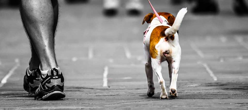 Futura ley sobre bienestar y tenencia de animales de compañía de la Generalitat Valenciana.