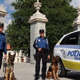 Musicoterapia para los perros de la Policía Municipal de Madrid