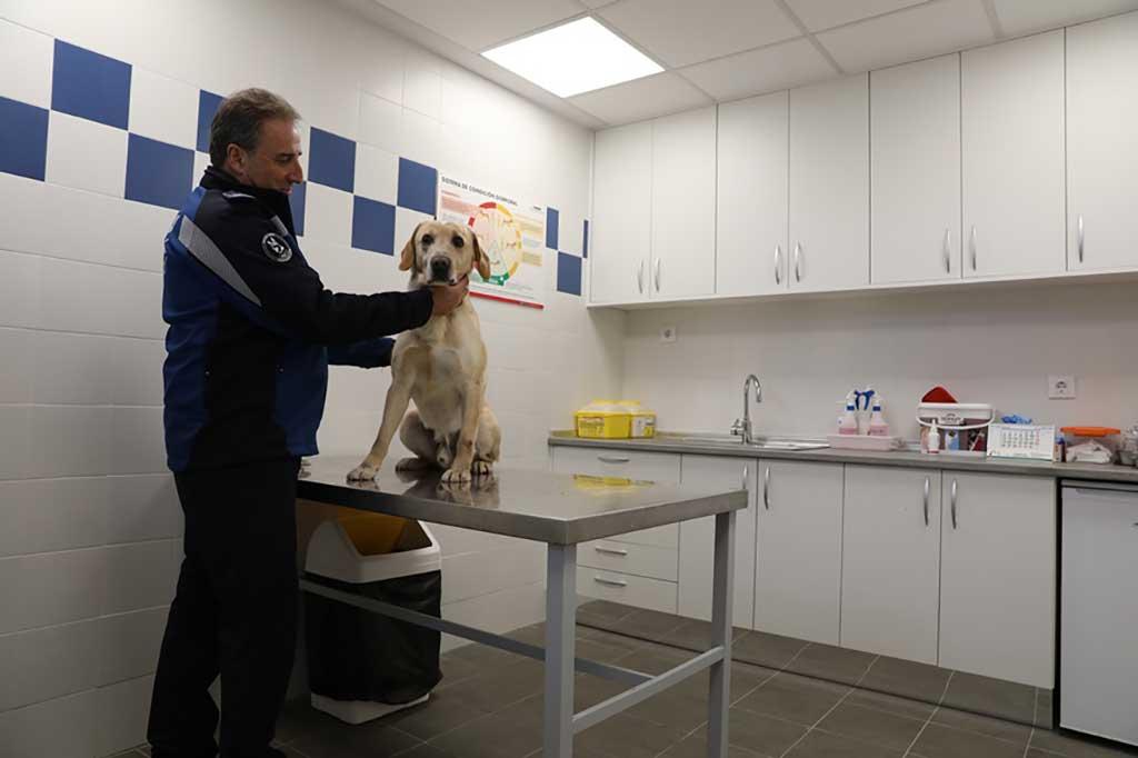 Musicoterapia para los perros de la Policía Municipal de Madrid.