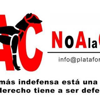 Concentración en Cuenca para exigir el fin de la caza con galgos y perros de otras razas.