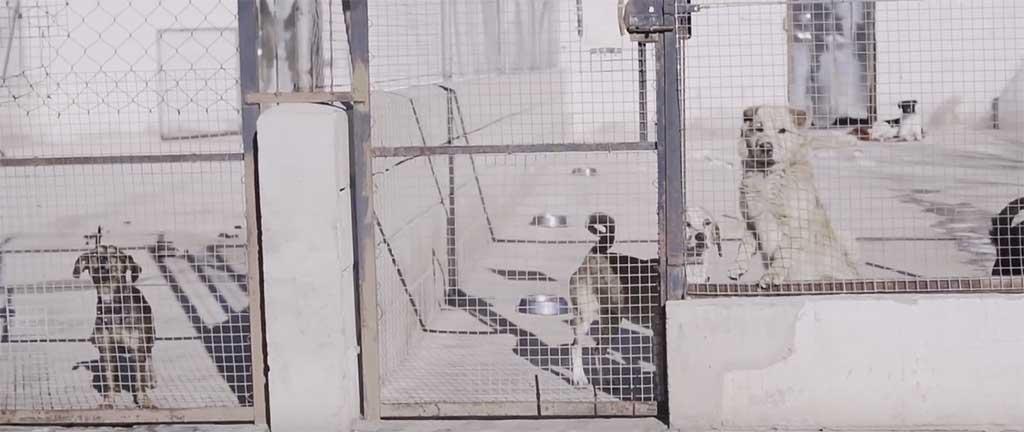 Snau lanza una campaña de concienciación frente al abandono de perros en Semana Santa
