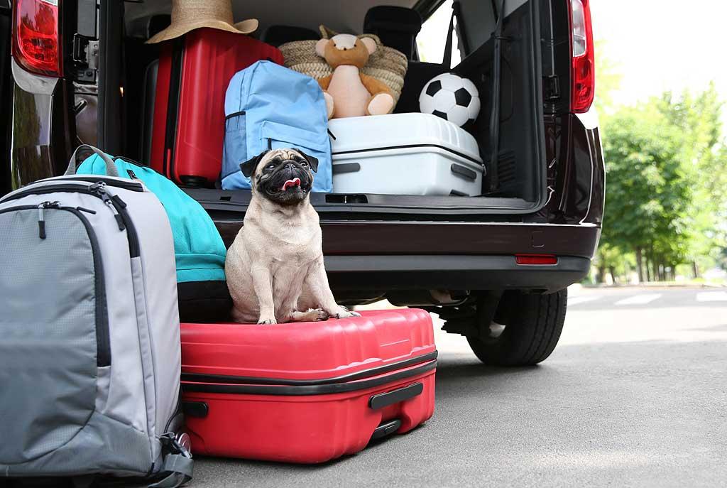 Viajar con mascotas: 3 de cada 5 españoles lo hacen.