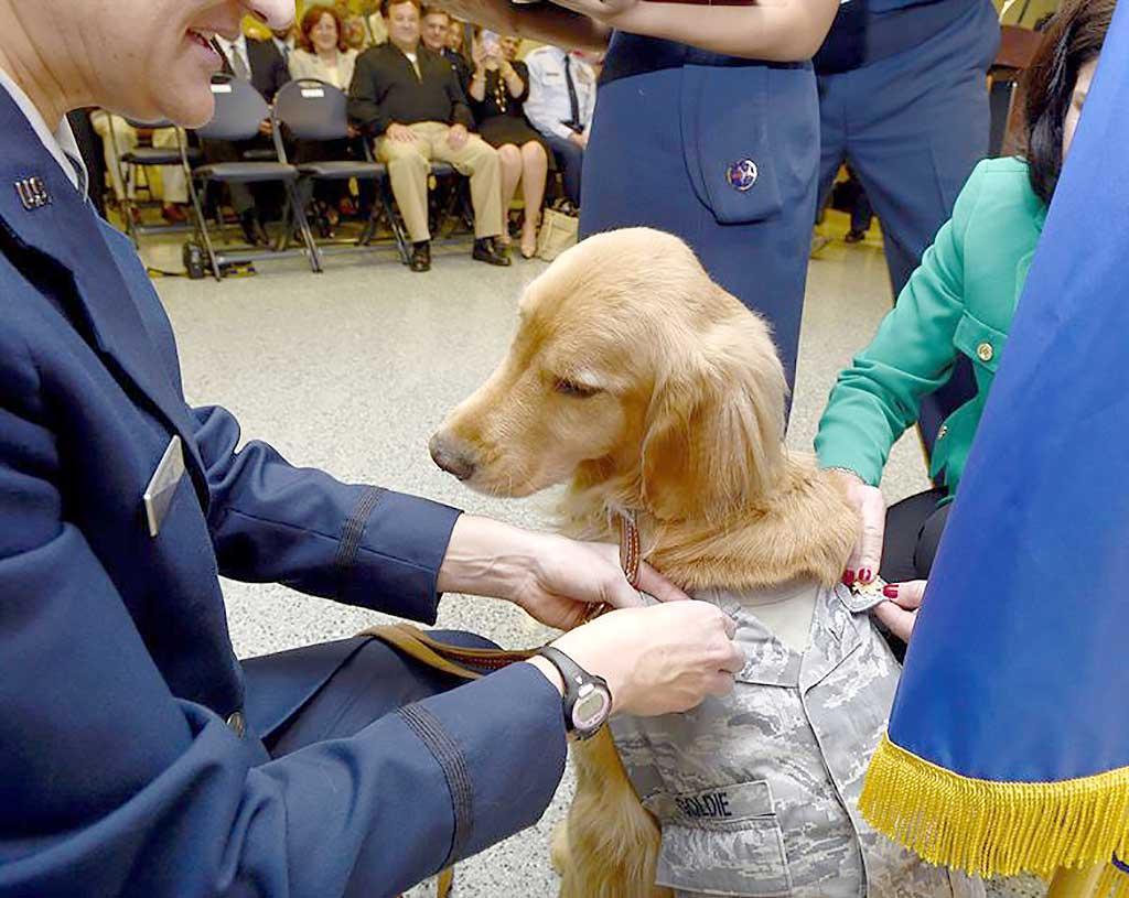 Impacto de las TAA con perros en niños con cáncer.