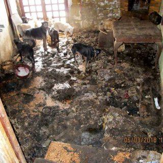 Síndrome de Noé en Piedratejada:El SEPRONA de la Guardia Civil investiga a una persona por un presunto delito relativo a la flora y la fauna, por maltrato animal