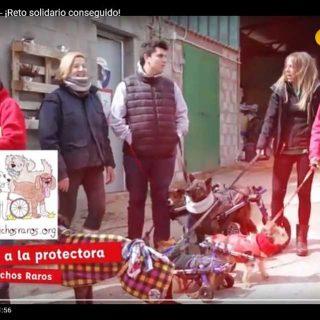 10.000 animales desparasitados con la última campaña solidaria de Kiwoko