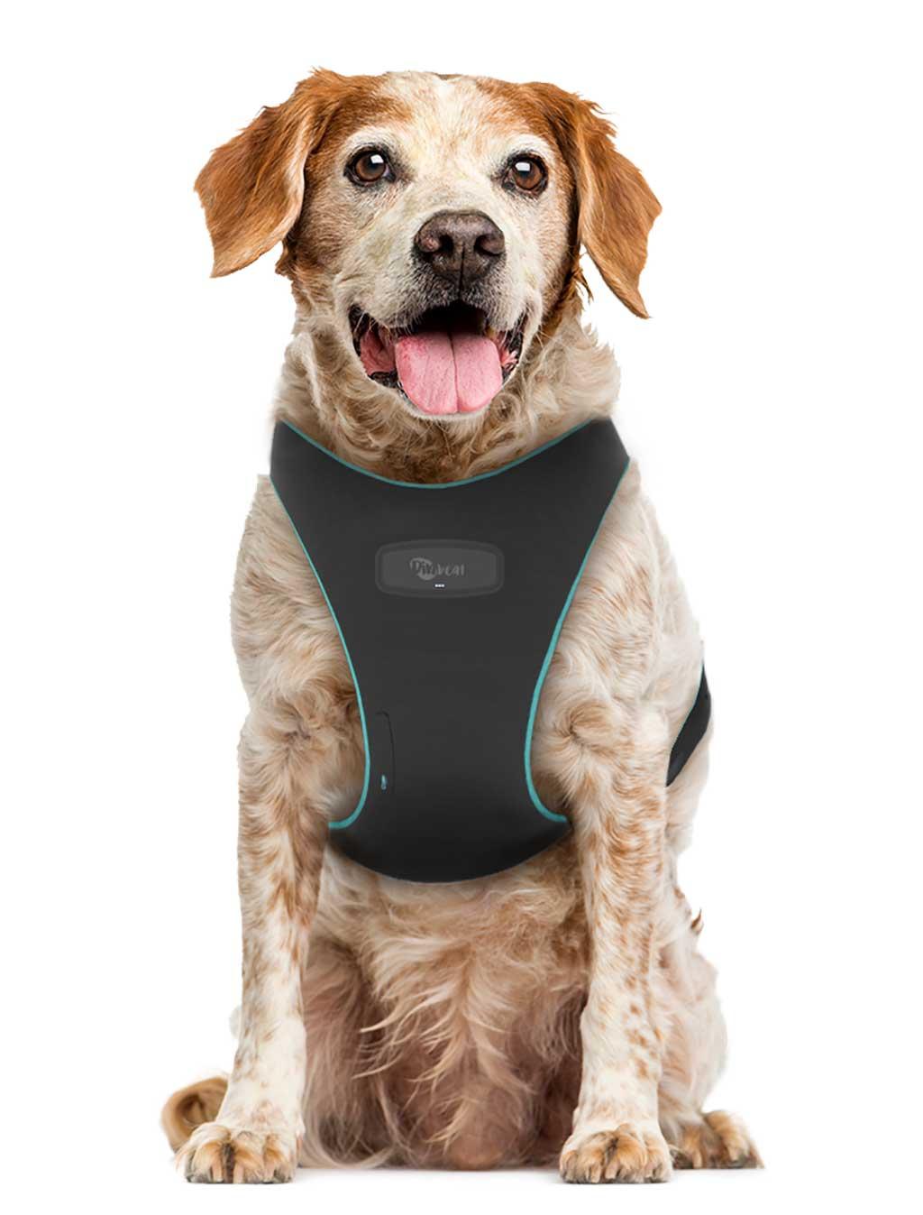 DinbeatPRO, arnés para monitorizar en remoto y tiempo real la salud de las mascotas.