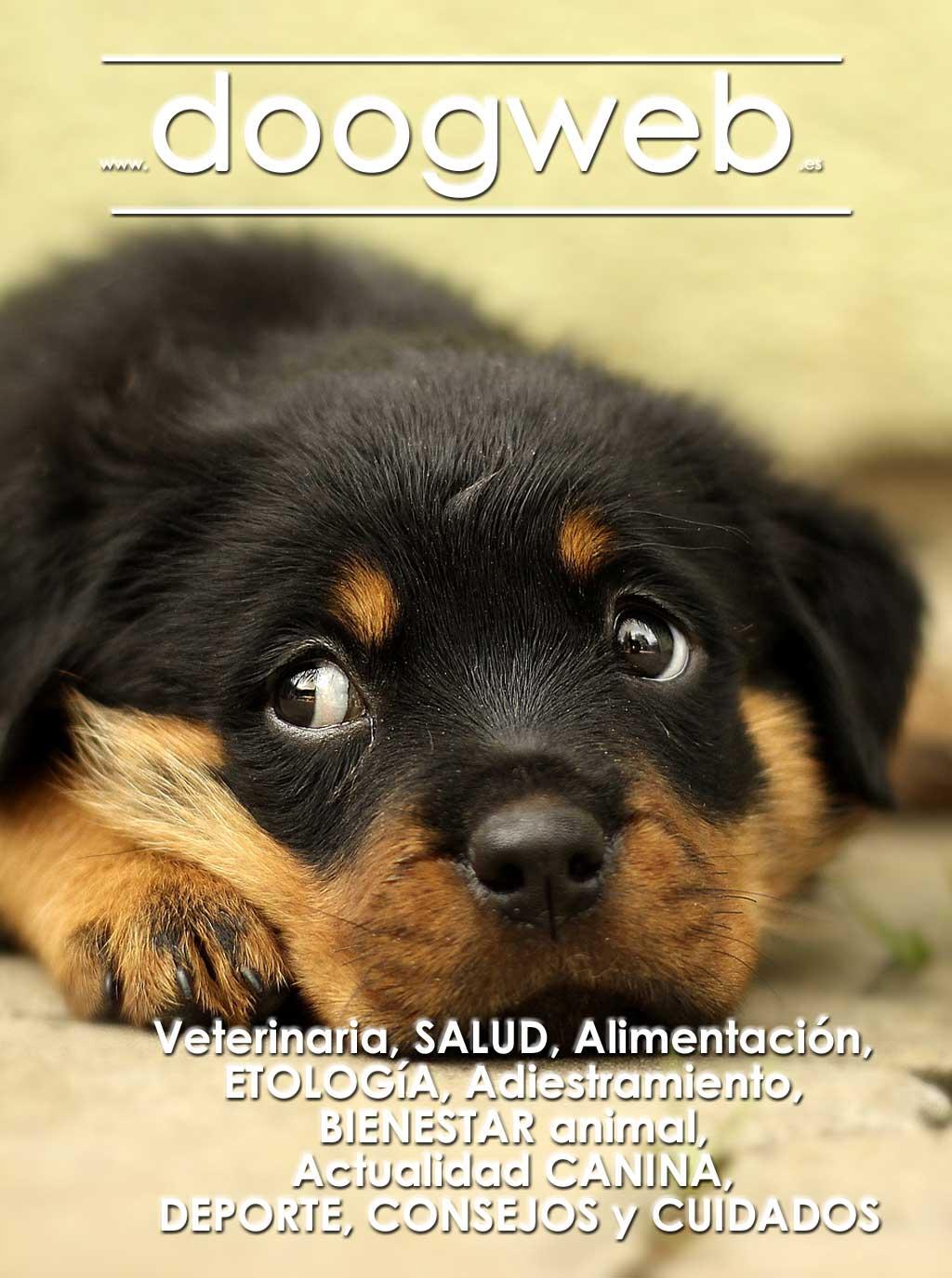 Revista de perros de Doogweb, mayo 2018.