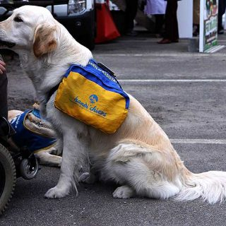 """Sasha, primer """"perro de servicio"""" en Cataluña para personas con discapacidad"""