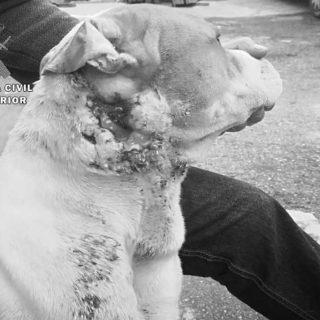 Guardia Civil investiga a un menor por presunto maltrato y abandono de un perro .