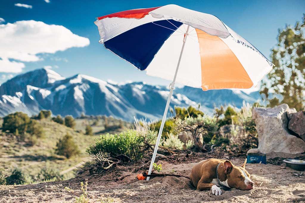 Tips para cuidar de tu perro en verano.