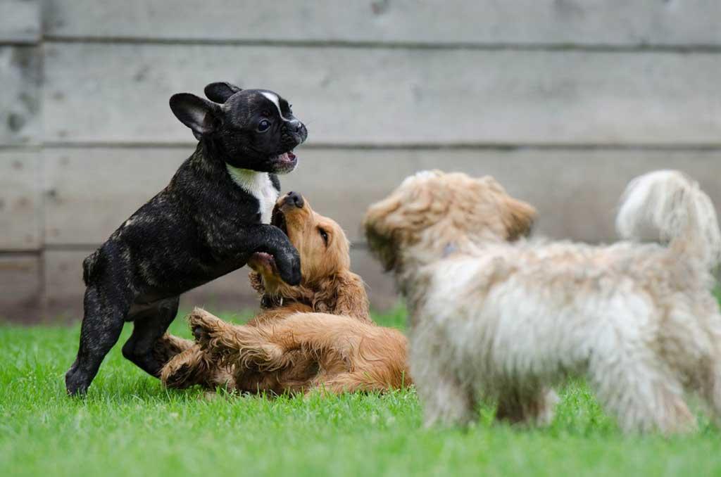 La socialización de los perros NO se puede forzar.