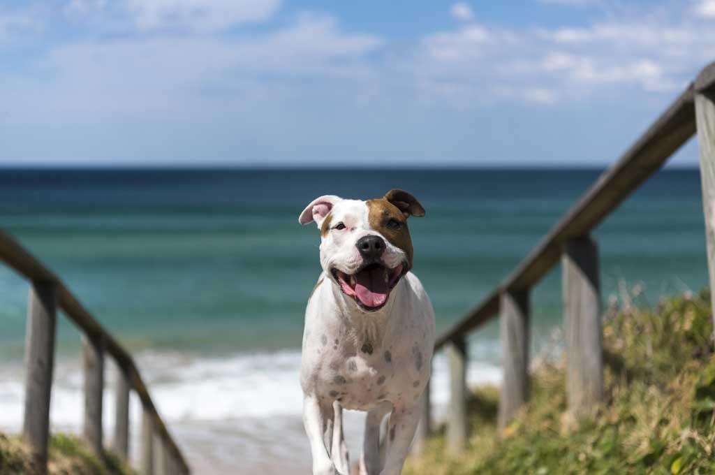 Las mejores playas para perros en 2018 son...