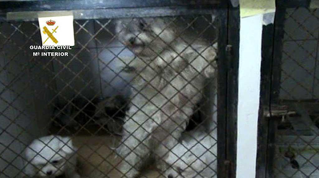 Desmantelado criadero de perros ilegal en Paracuellos (Operación Altanería)
