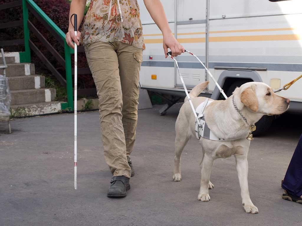 Un perro guía... ¡también es un perro!.