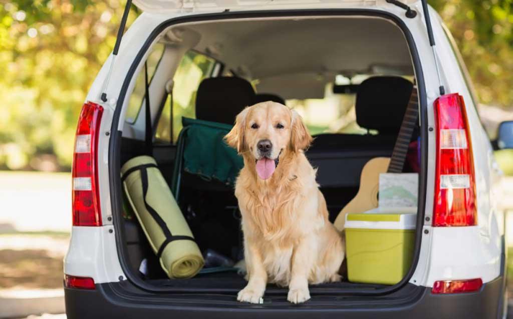 """6 consejos para viajar con tu mascota este verano sin """"morir en el intento"""""""