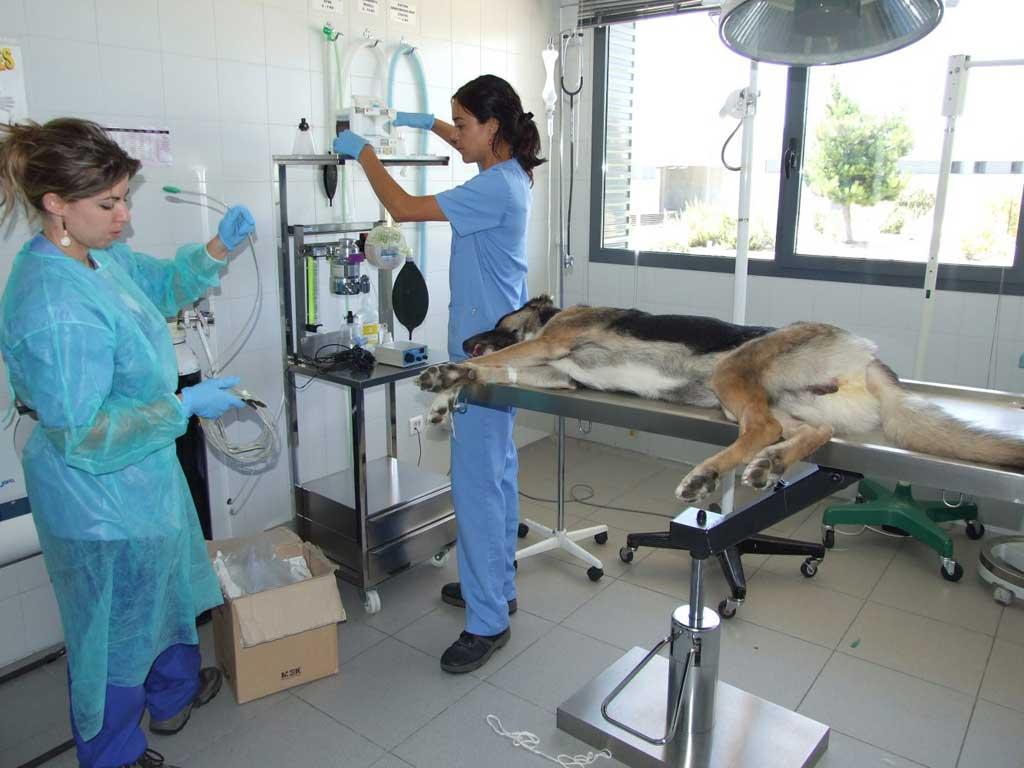 El Centro de Protección Animal De Madrid gestionó la adopción en 1.733 animales en 2017