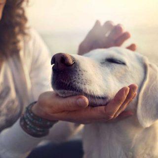 """Consejos para superar la vuelta a la rutina de tu perro con matrícula de honor. Mientras que nosotros escuchamos """"guau, guau, guau"""" (o """"miau, miau, miau""""), puede que nuestra mascota esté queriendo decir: """"¿Quién quiere volver a casa? ¡Vamos a seguir de vacaciones un poco más!""""."""