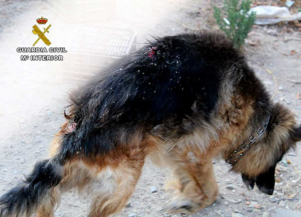 Guardia Civil investiga a un vecino de Águilas por delito de abandono animal.