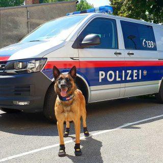 """Perros policía con """"zapatos"""""""