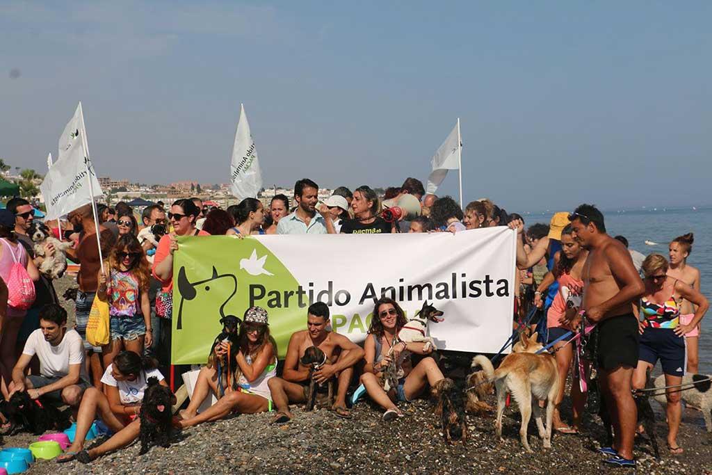 #PlayasParaTodos PACMA exige el libre acceso de animales a las playas. No existe un solo informe higiénico-sanitario que vincule la presencia de animales en la playa con insalubridad o riesgos de salud para los bañistas. Tampoco han existido problemas de convivencia en aquellas insuficientes playas en las que sí está permitido el acceso de animales.