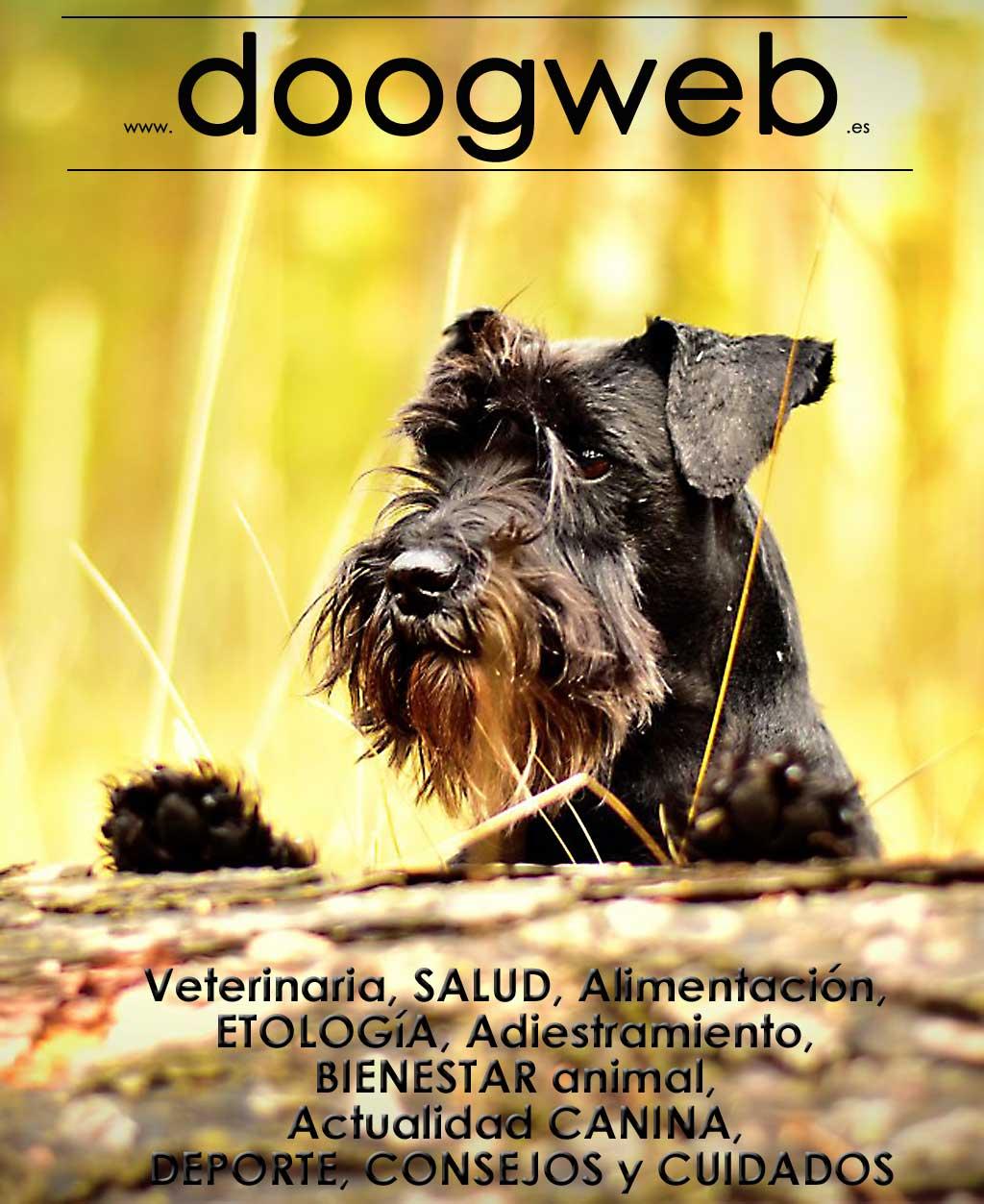 Doogweb Free Magazine September 2018.