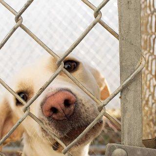 Estimulación olfativa para perros en albergues, refugios y perreras.