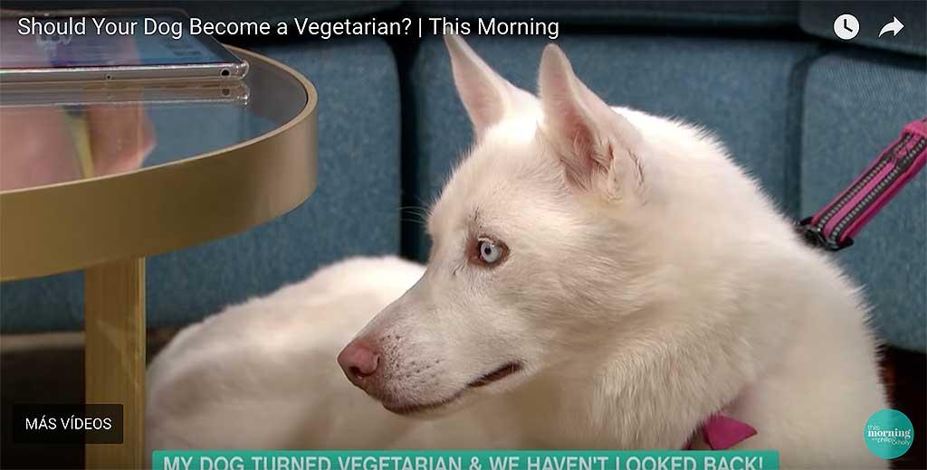 Mi perro es vegetariano... o cómo hacer el ridículo.