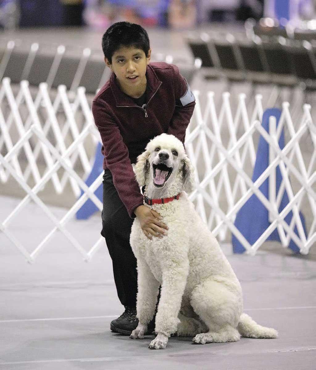 """Perro de compañía ejemplar: """"Teddy"""", un caniche estándar propiedad de Terri y Spencer Pardee de Concord, MI."""