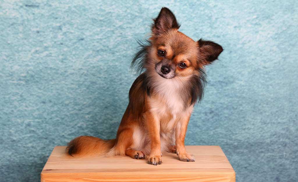 1. Chihuahua, #chihuahua: 19.378.097 menciones
