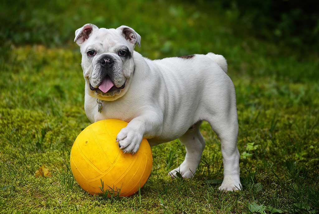 5. Bulldog, #bulldog: 13.732.520 menciones