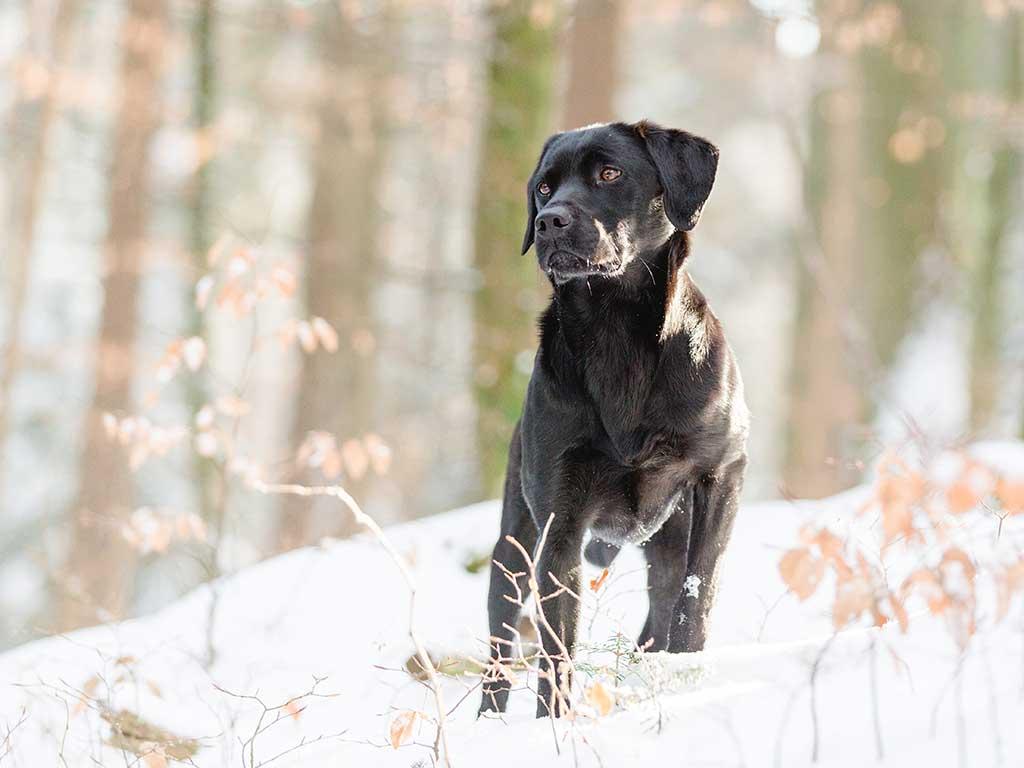 6. Labrador, #labrador: 13.475.316 menciones