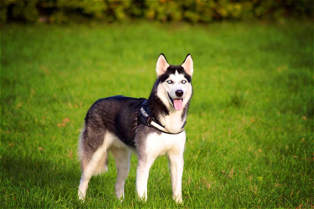 7. Husky, #husky: 12.118.254 menciones