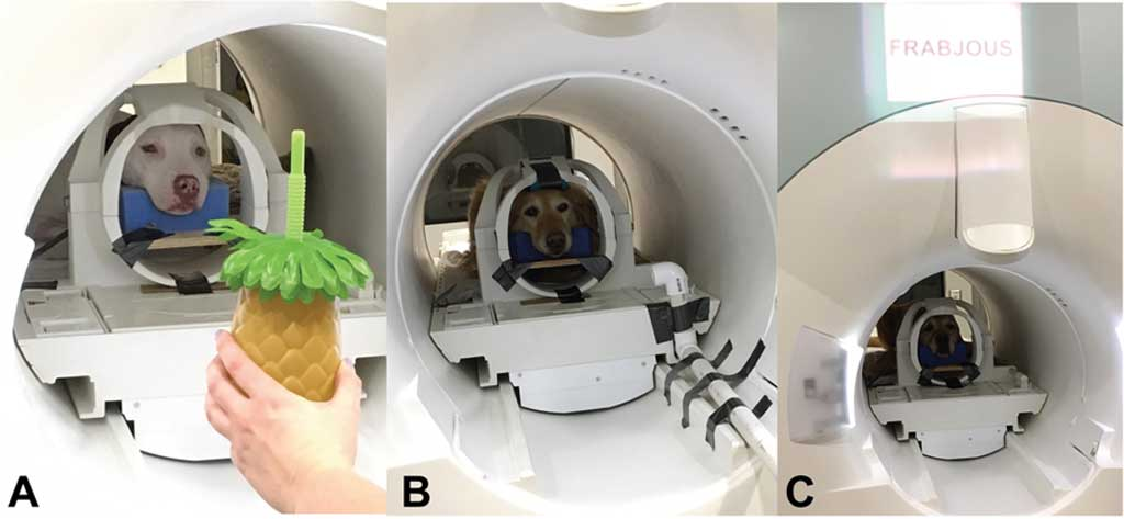 Aprendizaje neural rápido en perros.