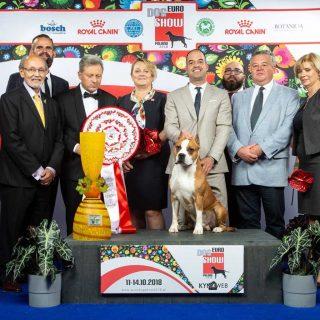 2º mejor puesto en la Exposición Canina Europea de Varsovia