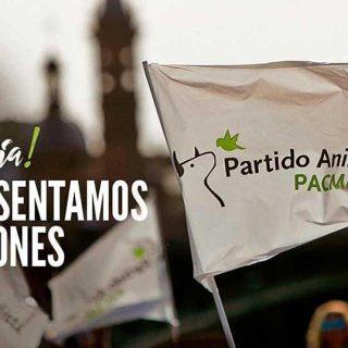 PACMA propone una Andalucía pionera en la lucha contra el maltrato animal.