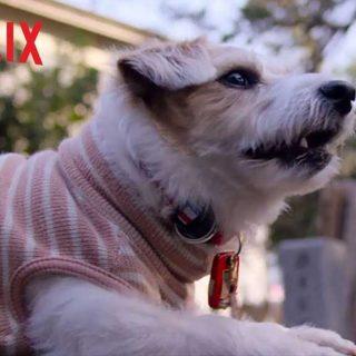 Amigos caninos, en Netflix.